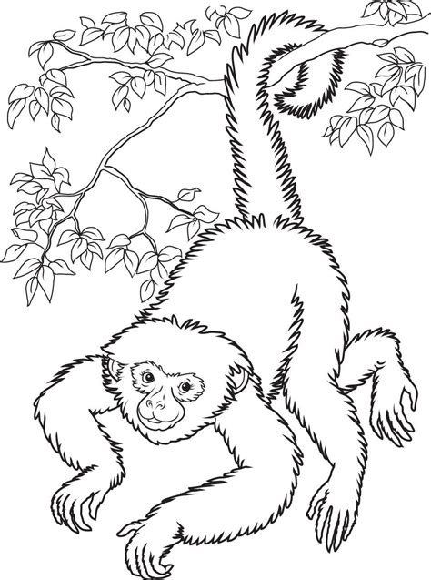 simple monkey coloring pages monkeys drawings step drawing of a simple and funny