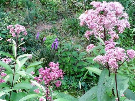 flowering shrubs michigan michigan wildflower farm info and seed mixes for