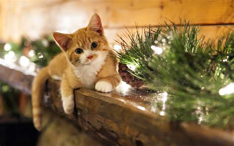 wallpaper cats christmas christmas cat wallpaper 75 images