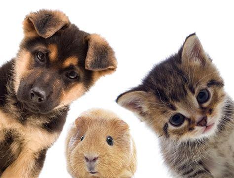 i pet pet supplies portland pets on broadway