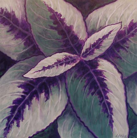 coleus purple  green plant leaves plants garden