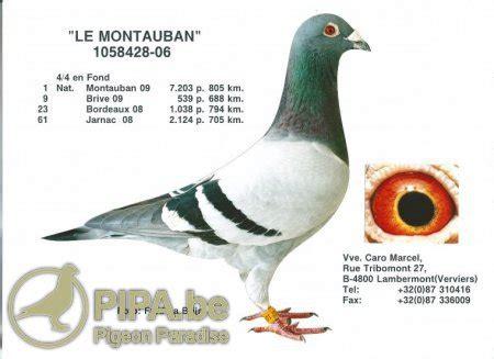 jean marc caro pigeons la colonie des fr 232 res caro de lambermont verviers est l