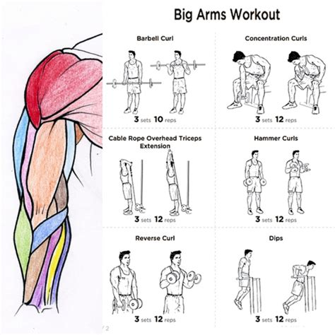 big arms workout plan fitness health routine bicep