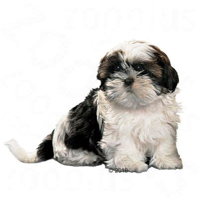 royal canin shih tzu food royal canin shih tzu junior at zooplus