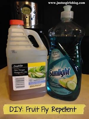 fruit fly spray diy fruit fly repellent home