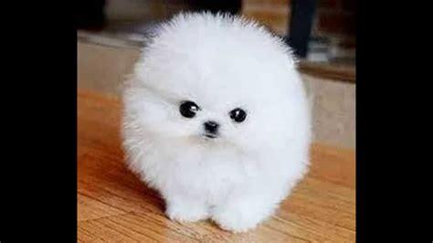 imagenes de animales bonitos perros bonitos con jesus ley youtube