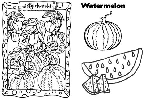 watermelon plant coloring page market coloring pages coloring pages ideas reviews