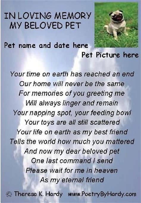 pets in heaven gift for owners in loving memory quotes quotesgram