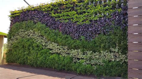 verticle gardening vertical gardens india