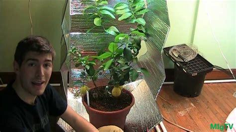 cheapest diy grow tent  indoor plants