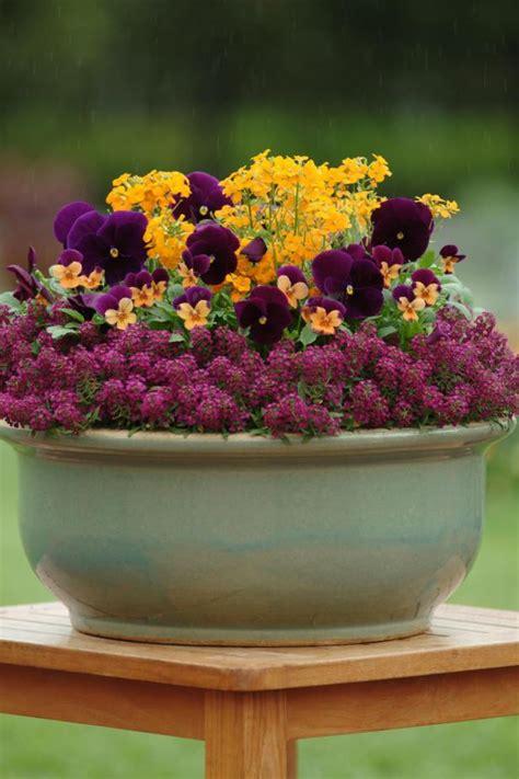 create  beautiful container garden  pansies hgtv