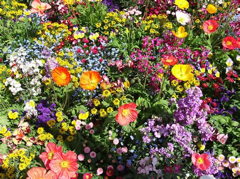 bunte blumen - Bunte Blumen