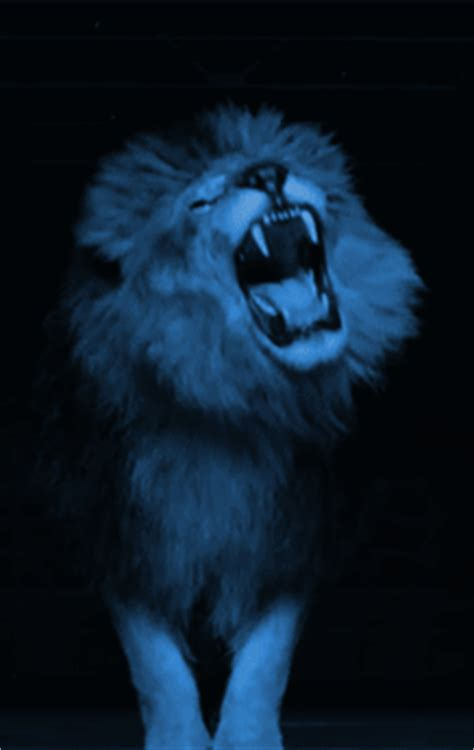 lion blue glitch gif find  gifer