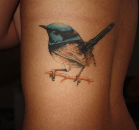 blue wren tattoo designs 1000 images about blue wren on posts in
