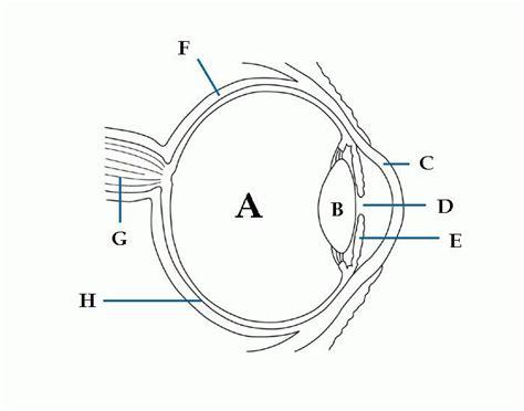 blank eye diagram blank eye diagram to label diagrams for all