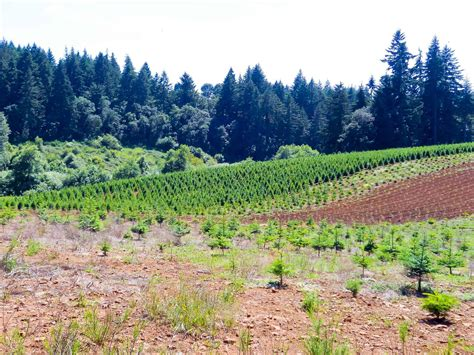 best oregon christmas tree farm best 28 tree farms in salem oregon tree farm property for sale in oregon