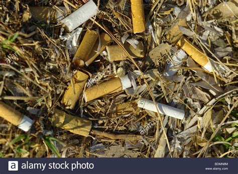 Yay Or Nay Fines For Ciggy Litter by Cigarette Buts Thrown Away Pile Of Rubbish