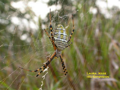 Garden Spider Pesticide Garden Spider Horticulture And Home Pest News