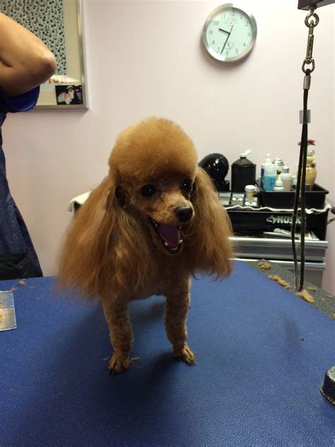 dogs houston grooming houston contact breeds picture