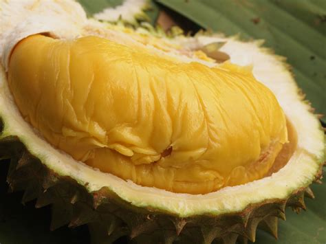 Bibit Durian Musang King 2017 musang s