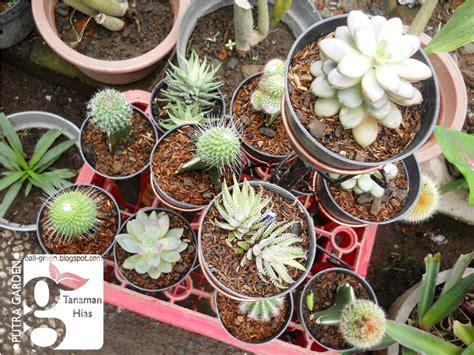 putra garden bali aneka tanaman hias kaktus mini termurah