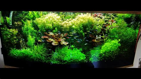 planted tank  shrimp aquascape hd p youtube