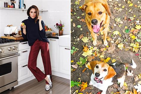 meghan markle dogs meet meghan markle s rescue dogs at toronto home