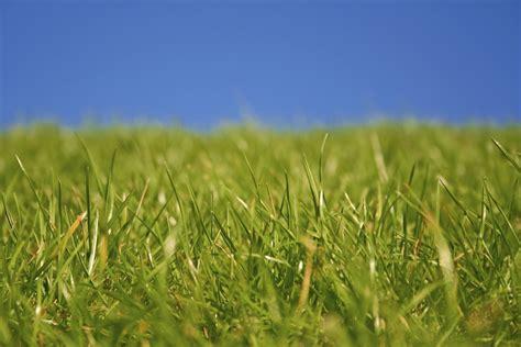Schädlinge Im Rasen 3129 by Pilzbefall Im Rasen Pilzbefall Im Rasen Hilfe Rosa