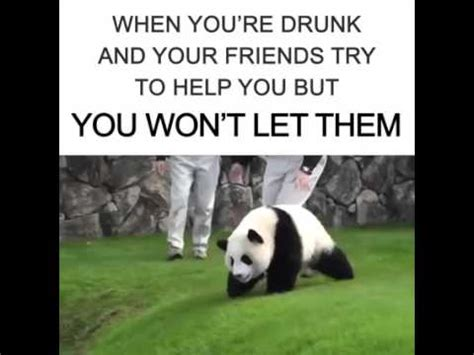 Drunk Panda Meme - drunk panda memes