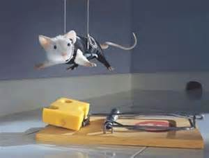 funny animals funny mice pictures images   funny mouse
