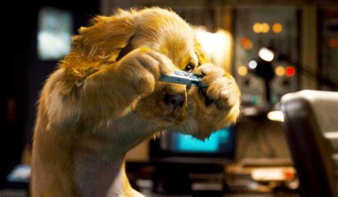 imagenes de kitty galore como perros y gatos la revancha de kitty galore