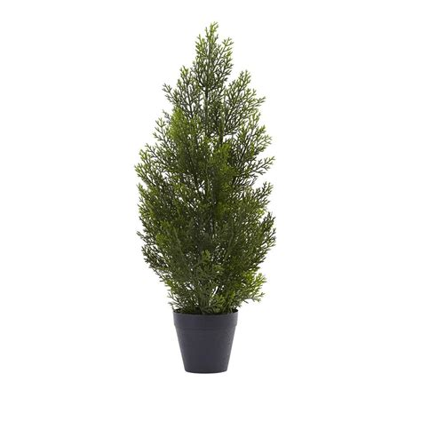 home depot alexandria pine tree nearly indoor and outdoor 2 ft mini cedar pine tree 5469 the home depot