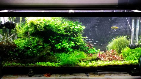 10000k light for planted tank low tech planted tank led lighting decoratingspecial com
