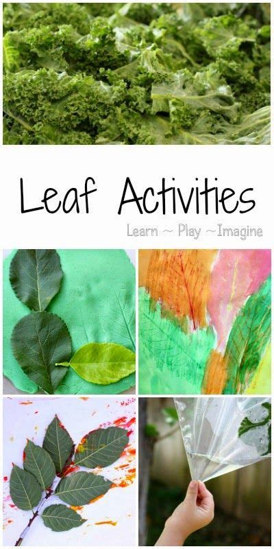 layoutinflater outside activity 17 best images about unit leaves on pinterest leaf