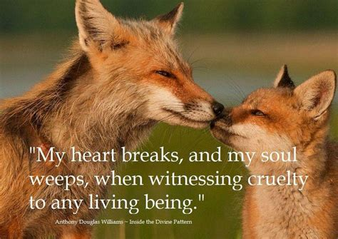 animal quotes cruelty to animals quote animal quotes and animals