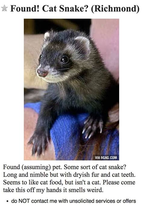found craigslist found cat snake pets animals