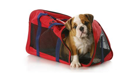 Book Your Travel To Dreamland Pet Pet Pet Product by How To Fly Your Pet For Free Budget Travel