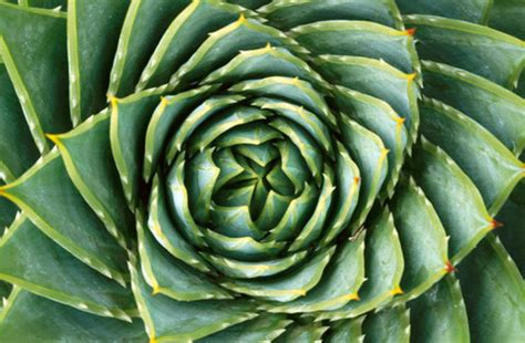 growth pattern in nature spirals in nature robertharding com news