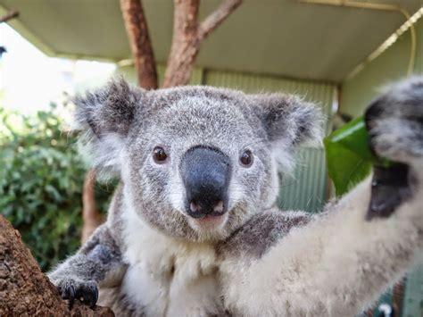 imagenes animales divertidos fondos de pantalla de animales graciosos y divertidos