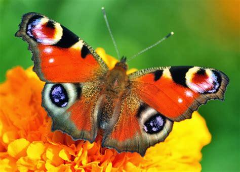 imagenes de mariposas de verdad im 193 genes espectaculares las mariposas m 193 s bellas