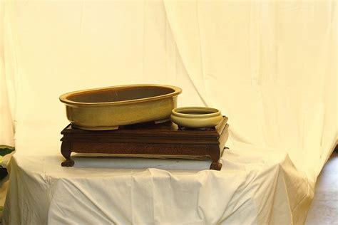vaso per bonsai vasi per bonsai roma bonsai lucaferri