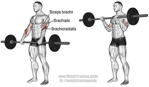 bicep curl with bench press barbell curl exercise and