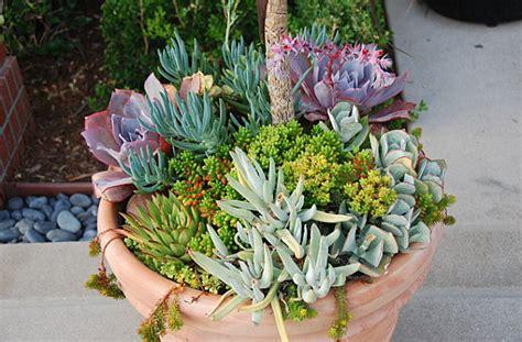 unique planters for succulents 10 unforgettable succulent planter arrangements
