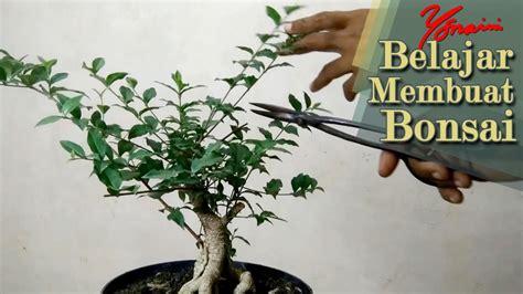 Baru Animal Island Tas Mini Tali Animal Island Terlengkap Murah pemangkasan awal bahan bonsai mini crape myrtle