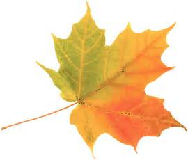 leaves change color why leaves change color untamed science