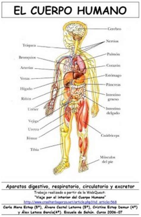 imagenes reales de organos del cuerpo humano el cuerpo humano el maravilloso cuerpo humano