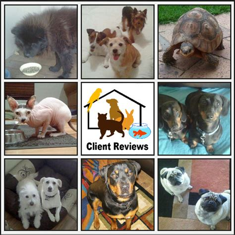 pet sitter business opportunity