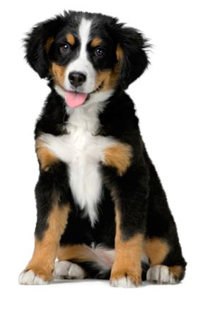 how should a puppy be to get how to stop your puppy from jumping on the what breed of should i get quiz uk