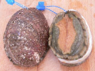 cuisiner ormeaux recettes 224 base d ormeau les recettes les mieux not 233 es