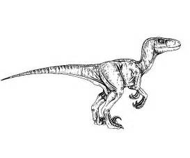 velociraptor coloring page free coloring pages of jurassic park 3